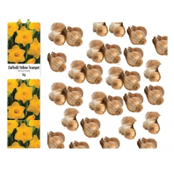5kg Yellow Trumpet Daffodil Bulbs