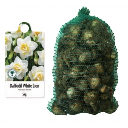 De Ree 5kg Bag Of White Lion Daffodil Bulbs 2020 Autumn 10/14cm Narcissus Double