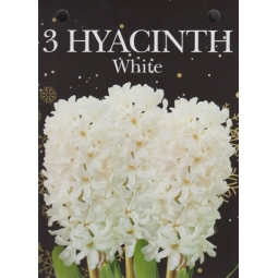 Gift Box Of 3 White Hyacinth Bulbs 15/16cm Growing Gift With Bulbs & Compost