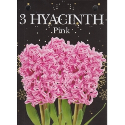Gift Box Of 3 Pink Hyacinth Bulbs 15/16cm Growing Gift With Bulbs & Compost